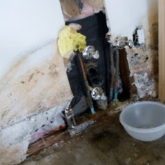 Mold Inspection in Reseda, California