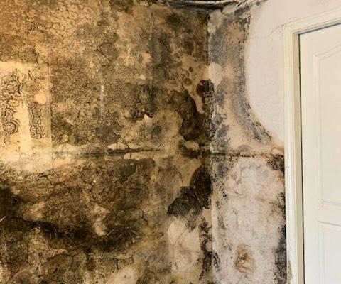 Mold Inspection in Menifee, California