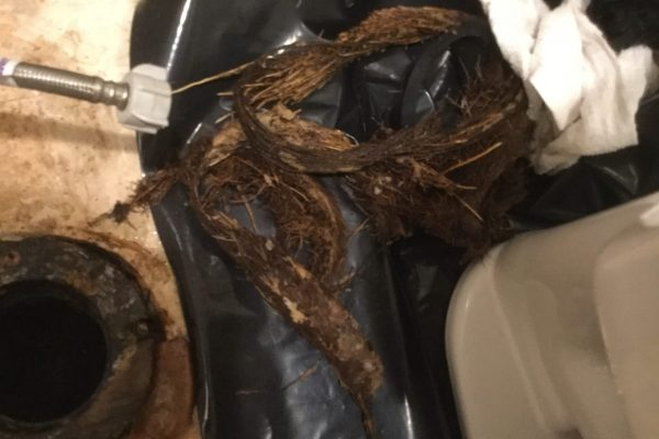 Removing Roots from Toilet in Rancho Santa Fe, CA.