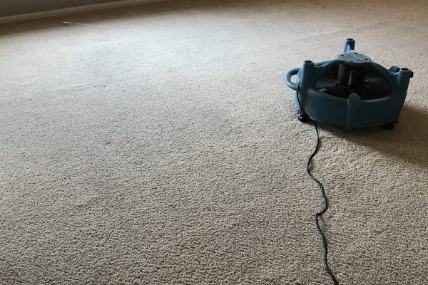 Carpet Cleaning and Stain Removal Murrieta, California