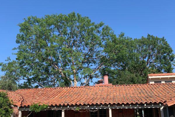 Tree Pruning Encino, California