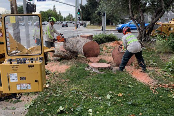 Commercial Tree Removal Service Arleta, California