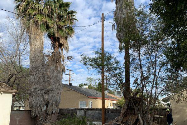 Palm Tree Removal Van Nuys, California