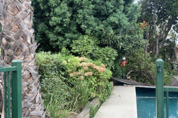Tree Removal Valley Village, California