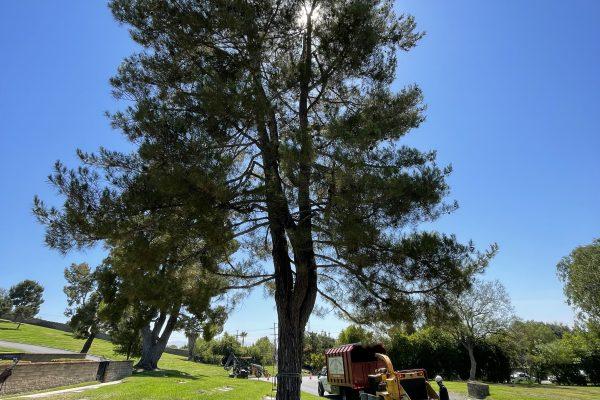 Tree Removal in Granada Hills