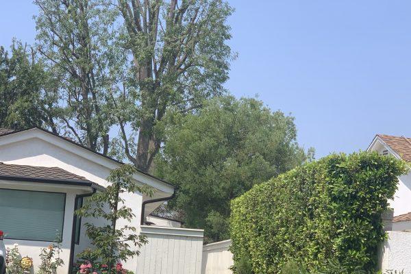 Tree Trimming In Bel Air