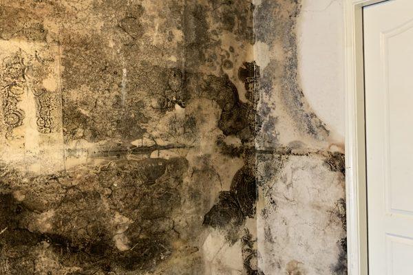 Mold Remediation in Chula Vista, California